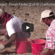 Fossil Finder #2 video
