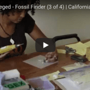Fossil Finder #3 video